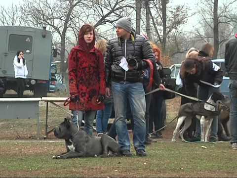 Новомосковск соревнования собак, выставка, благотворительный марафон сбор средств для 25 ой бригады