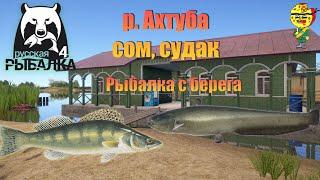 Судак сом с берега река Ахтуба РР4