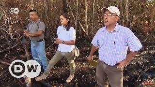 Mayaların yağmur ormanları imdat çığlığı atıyor - DW Türkçe