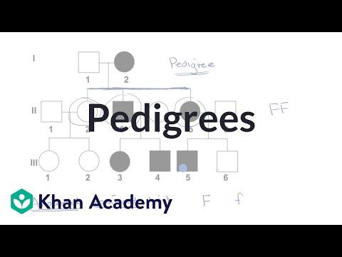 Pedigrees   Classical genetics   High school biology   Khan Academy