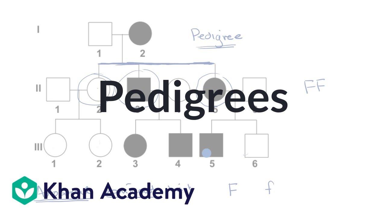 Pedigrees (video) | Classical genetics | Khan Academy