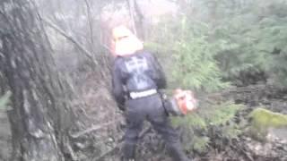 ekspresowa wycinka lasu