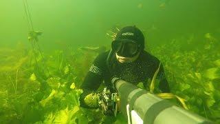 Подводная охота оз. Чикино (р.Оредеж).
