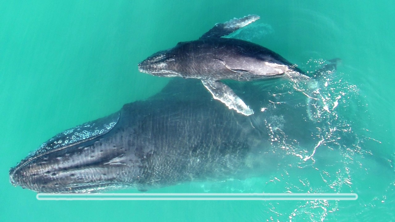 Baby whale whispers - YouTube