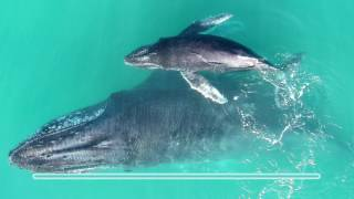Baby whale whispers
