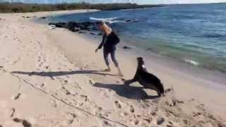 Sea lion wants to play / Морской лев играется