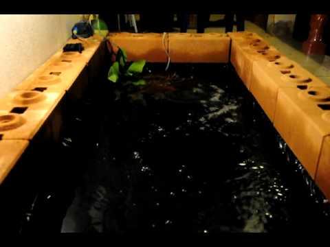บ่อปลาคราฟที่ทำกันเองหน้าห้องพัก