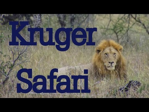 Kruger National Park Wildlife Safari
