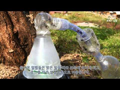 [불로양봉원] 2016년 신형 야생 말벌 포획기