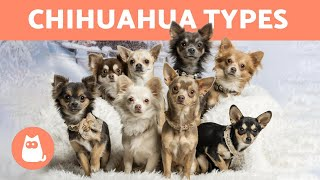 Types of   Breed Names and Characteristics