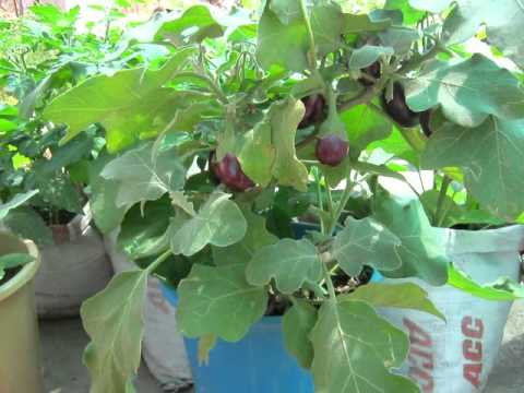Organic veg cultivation by nss unit no 49 1 avi funnydog tv for Terrace krishi