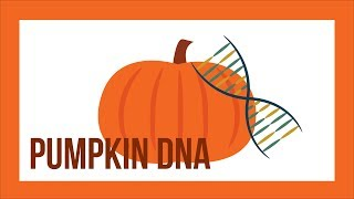 Extracting Pumpkin DNA - Halloween Science Experiments