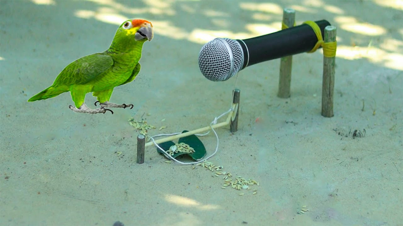Easy Way To Make Bird Trap   Parrot Vs Microphone - Dove Vs Water Bottle   Easy Bird Trap