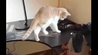 Как отучить кота лазить по столу – самый простой способ