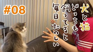 【第8話】犬と猫どっちも飼ってると毎日たのしい【実写版】