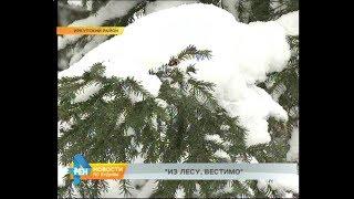 В лесу родилась ёлочка, или Как и где легально купить символ Нового года в Иркутске?