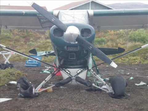 bear destroys aircraft
