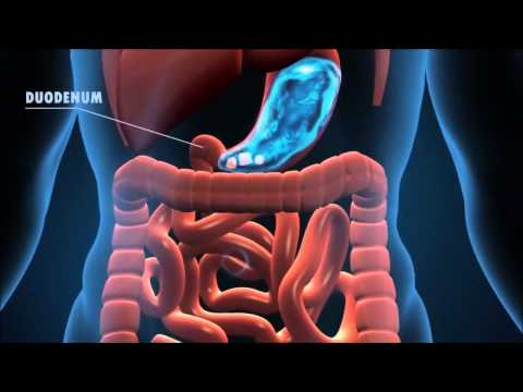 The Journey of the Digestive System
