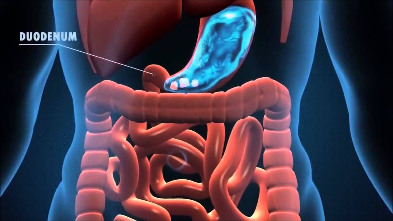 The Journey of the Digestive System - YouTube
