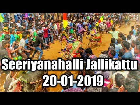 Seeriyanahalli Jallikattu 20-01-2019 || Near Marandahalli || Hori Habba Jallikattu