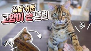 하루 만에 고양이 '손' 훈련하는 법! (돌아까지 하는 천재 랑이..?) 꿀꿀선아