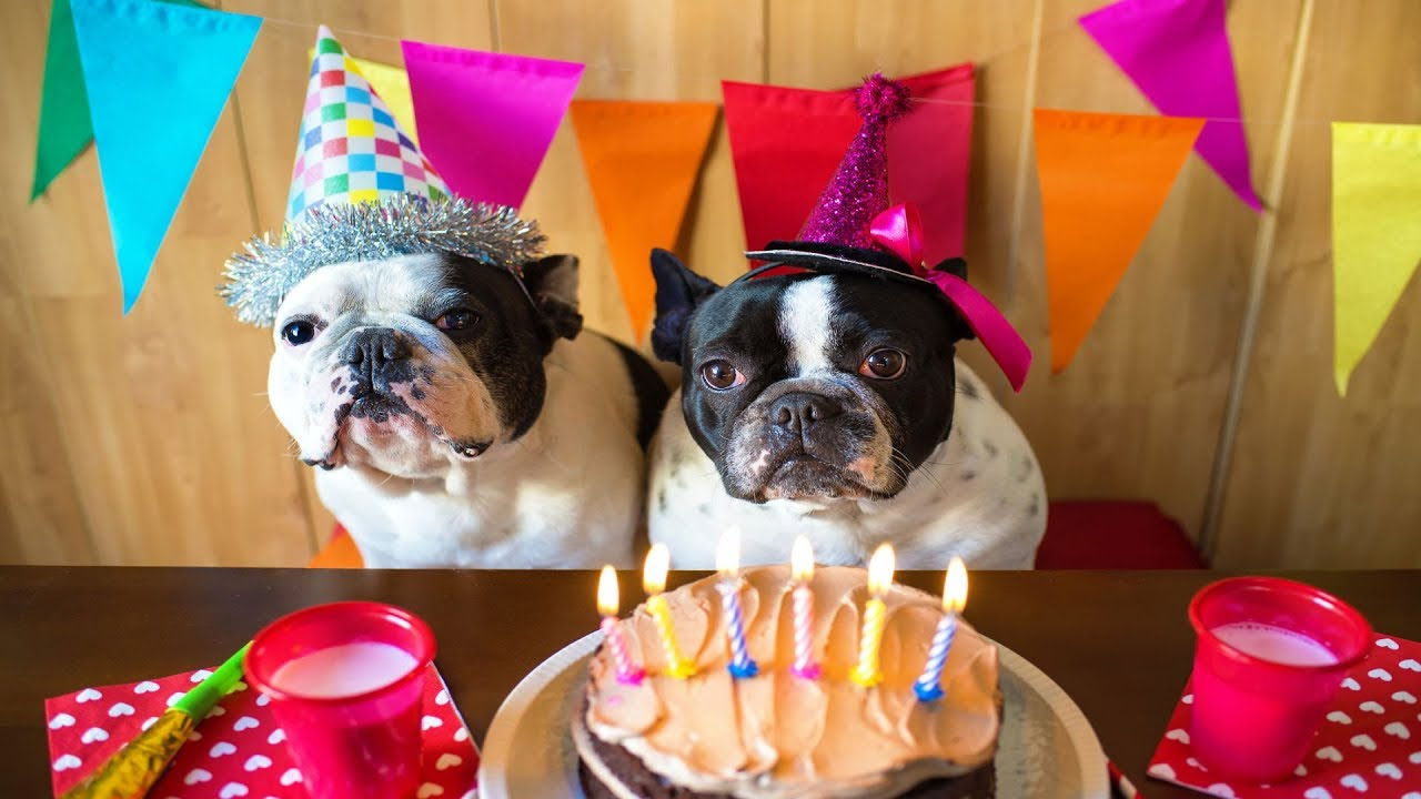 Diy 3 Ways To Throw The Best Dog Birthday Party Ever Youtube
