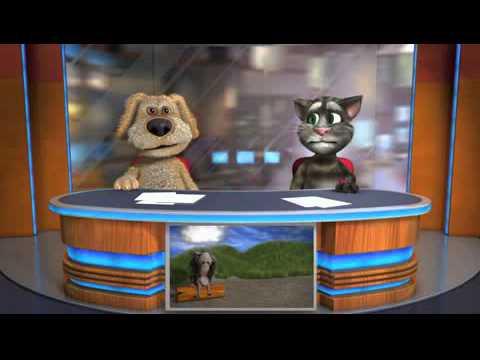 Говорящие новости говорят кот и собака