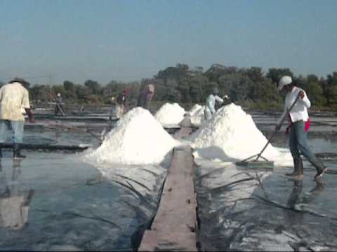 The Salt Harvest Process at Maya Natural Sea Salt Facility in Guatemala