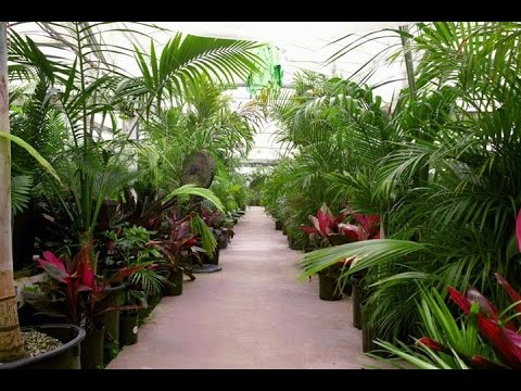 Palm Tree Houseplants