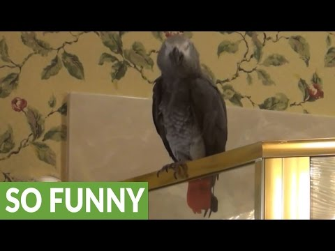 Parrot flawlessly sings 'Who Let The Dogs Out'