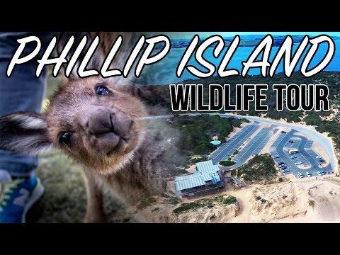 Australia Vlog   Phillip Island Wildlife Adventure   Koalas, Kangaroos, & Penguin Parade + Drone