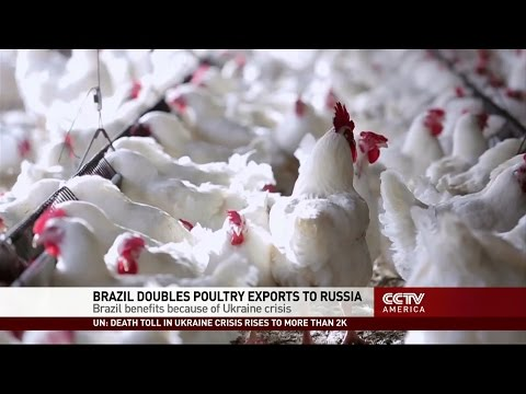 Brazil expects to double annual poultry exports to Russia