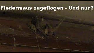 Fledermaus im Haus - Und nun? Die stinkigste Kacke der Welt