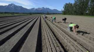 Alaska Grown- Vegetable Production