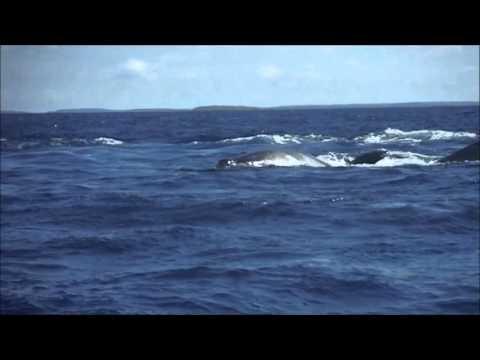 Kiti v razburkanem