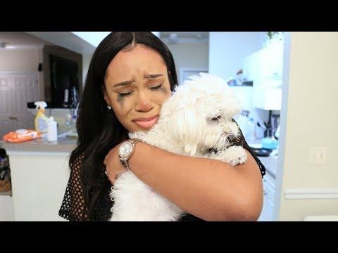 DOG RAN AWAY PRANK (SHE CRIES & GETS VIOLENT)