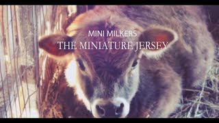Mini Milkers - The Miniature Jersey Cow