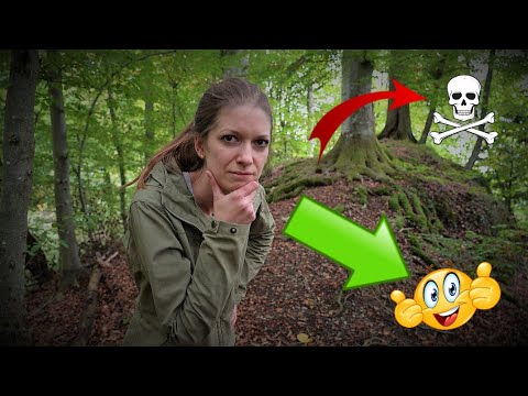 Lost  in the forest — what now? ➡️These tips will help you get through it⬅️