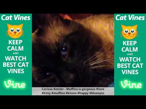 Funniest Cat Vines #108 - Updated September 10th, 2015
