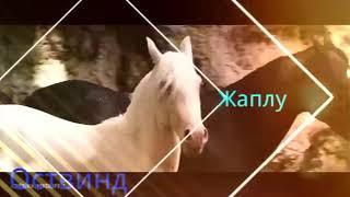 ТОП 7 лучших фильмов про лошадей