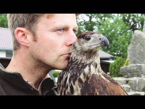 Aufzucht und Leben mit Greifvögeln