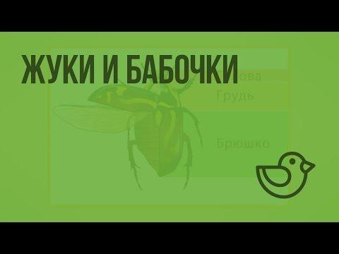 Жуки и бабочки. Видеоурок по окружающему миру 1 класс