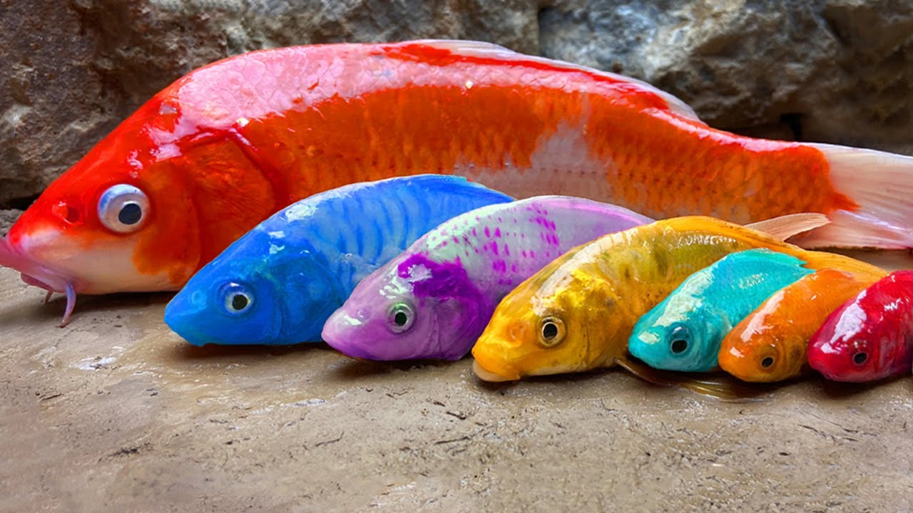 Exotic Colorful Fish on River - Stop Motion Relaxing Catching Eel Egg, Seafood, Catfish   Cuckoo