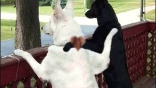 Dogs Meet - Community Dating Site