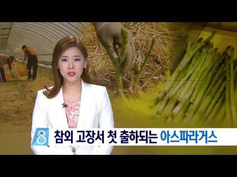 2017.04.04 (화) 대구 MBC 뉴스데스크
