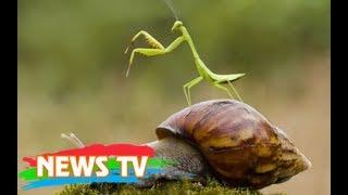Top 10 loài côn trùng săn mồi nguy hiểm nhất thế giới