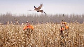 Нарезка лучших выстрелов из охоты на фазана 2017 / ТОР-8  SHOTS PHEASANT HUNTING