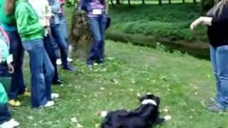 Dzieci uczyły się jak obchodzić się z psami