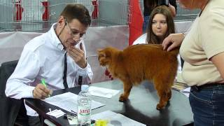 Somali Red on catshow  bribing the judge with charm :)