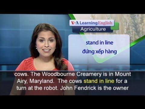 Phát âm chuẩn cùng VOA - Anh ngữ đặc biệt: Cow-Milking Robot (VOA)